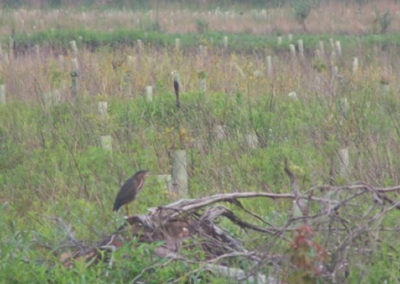 Foggy Bottom Wetland Mitigation Bank